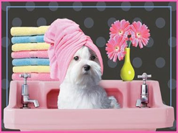 Professional Pet Grooming!