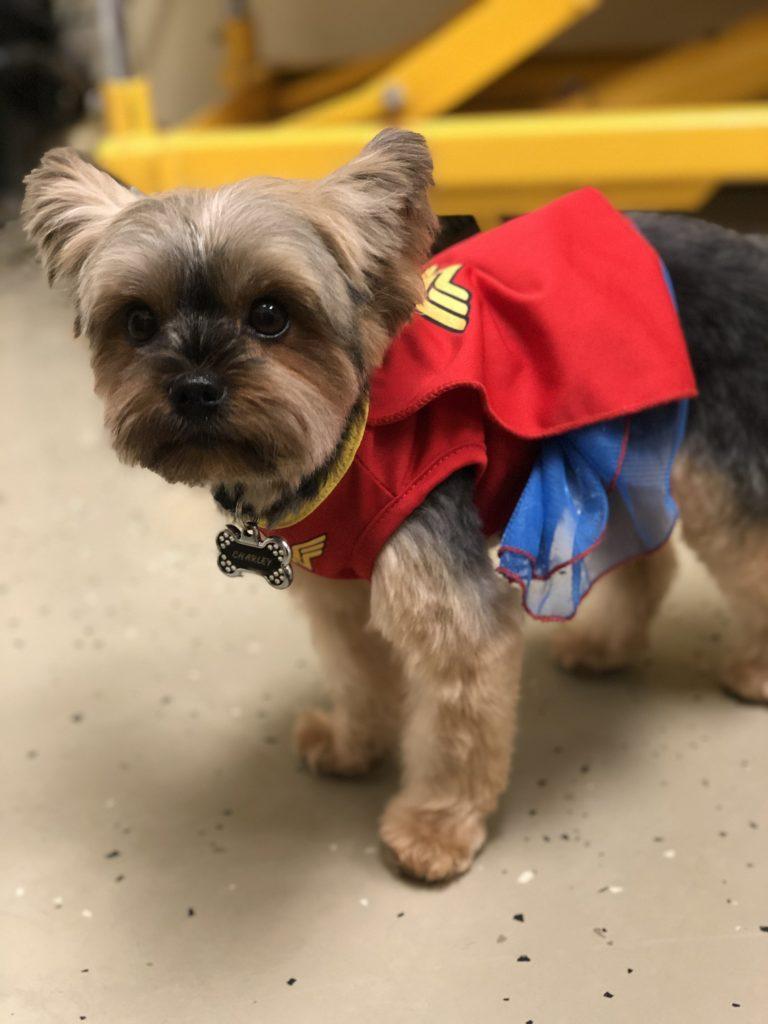 Charley as Wonder Woman!